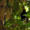 Ablakunkból-májusban - feketerigó énekel a szobaablakunk előtt lévő fáról