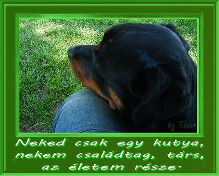 Neked csak egy kutya,...