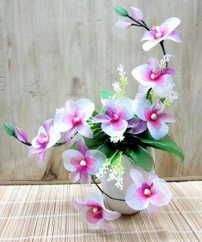 fehér orchidea mintának
