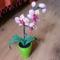 Orchidea_szulinapra__1998109_8262_s