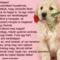 Amit egy kutyustól tanulhatunk