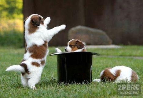 kiskutyak_a_cilinderbol