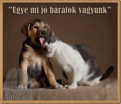 Kutyus-Cica