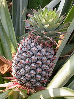 ananász 1