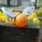 méhecske előről