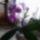 Orchidea-008_1909482_3939_t