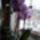 Orchidea-009_1909484_8286_t