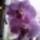 Orchidea-011_1909493_3330_t