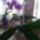 Orchidea-013_1909488_1002_t