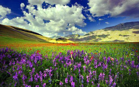 Virágos mező-10458