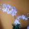 Fehér orhidea harisnyavirág