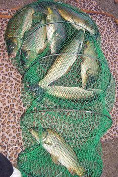 Helyőpapi horgásztó