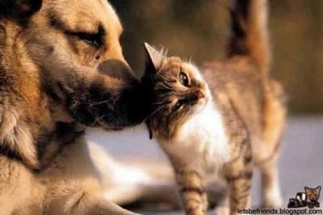 dörgölödzés kutya cicc