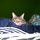 Kenyelmes__1265_1454106_t