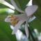 Citrom virágzás november-december