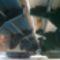Kiserdei_lajta_hid_fejlesztese_mosonmagyarovar_20191211en-003_2111232_2966_s