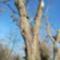 Látványos, égre meredő száraz fák a Mosoni-Duna jobb partján. Mosonmagyaróvár 2019.12.08.-án 2