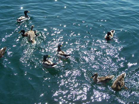 Garda-tó 324  Jó nekik!