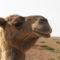 Marokkó 2008 1024