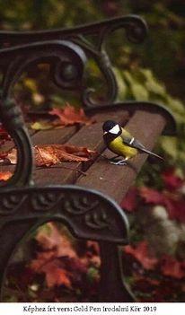 Mi lesz veled cinege madár...Dáma Lovag Erdős Anna verse: