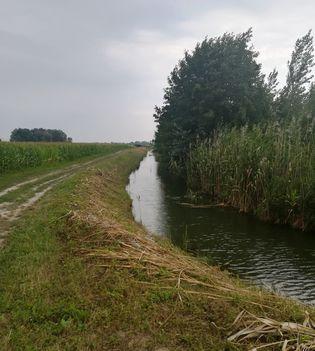 Szentkúti csatorna Darnózseli és Dunaremete községek közigazgatási határán, 2020.08.11  (2)