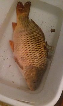 Nyéki képek és halak 053
