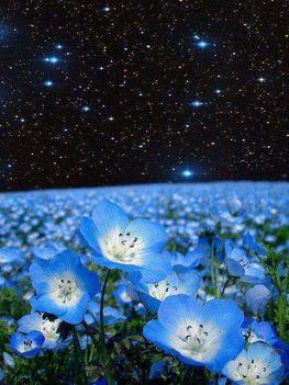 Augusztusi csillagok...