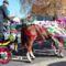 Csingis lovak felvonulása a Halászi Szent Márton búcsú napján, 2016. november 11.-én 1
