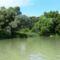 Szigetparti töltőbukó a Duna folyam felől, Rajka 2016 július 13.-én 4