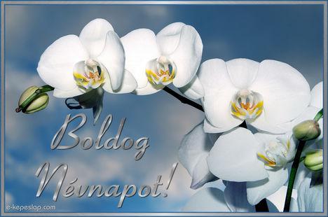 Boldog névnapot kívánok minden kedves Erzsébet nevű klubtagnak és ismerőseimnek szeretettel :üdv Julika