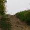 Fácán kakas menekülőben