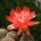 Kaktusz_2013431_2647_s
