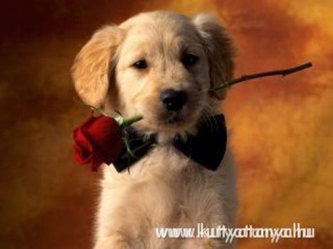 rózsa + kutyus