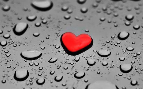 Szív az esőben : Dáma Lovag Erdős Anna
