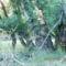 Álomzugi Holt-Körös (Öcsödi holtág)