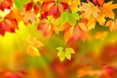 Őszi levelek...