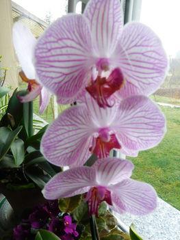 virágzunk 2