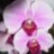 virágzunk 3