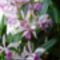 virágzunk 4