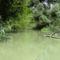 Zalka Duna-ág a Szigetközi hullámtéri vízpótlórendszerben Doborgazsziget és Tejfalusziget között, 2016. július 13.-án 5