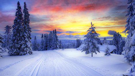tél-Fenyves erdő naplementében