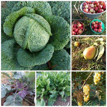 Zöldség-gyümölcs szüret