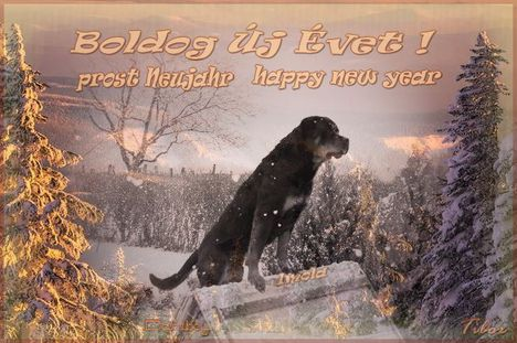 Boldog Új Évet !