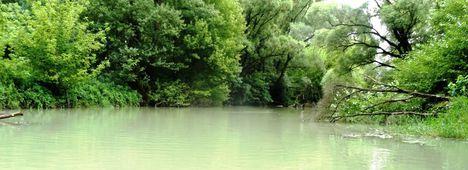 Nyárasi Duna-ág bal parti mellékága a Kőhíd alatti szakaszon, Cikolasziget 2016. június 14.-én 2