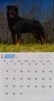 Rottweiler - Január
