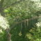 Rozsdafarkú hüssöl a levelek közt