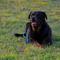 Dani a fűben