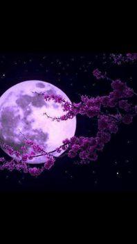 Hold világnál...:Dáma Lovag Erdős Anna