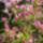 Kertjeink, virágaink