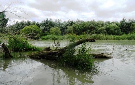 Nyárasi Duna-ág a Féholdaki csatorna torkolatánál, Kisbodak 2016. július 14.-én
